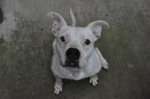 Piglet,  Lisa and Richard Caldwell's dog
