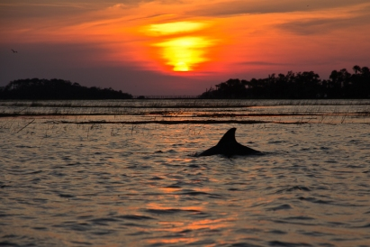 Dolphin in Low Country Marsh (patriciapschaefer.com)